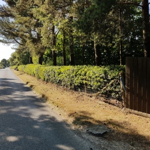 Natural Hedge