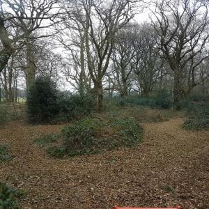 Wood path Mulch
